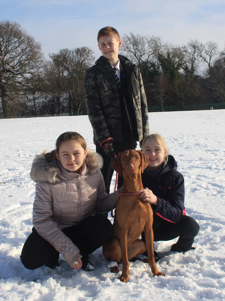 Therapy Dog Amber Helps Year 7s with Reading
